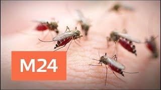 Смотреть видео Угрожает ли Москве нашествие комаров - Москва 24 онлайн