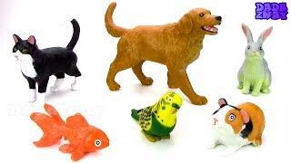Учим животных для самых маленьких| Звуки животных для детей | Голоса домашних животных