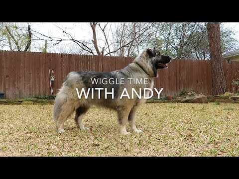 GORGEOUS DOG in Slow Motion!!
