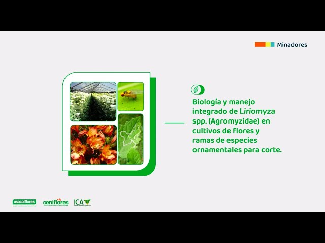 Biología y manejo integrado de Liriomyza spp. en especies ornamentales de corte