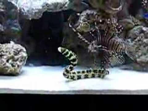 90 Gallon Saltwater Fish Tank - YouTube