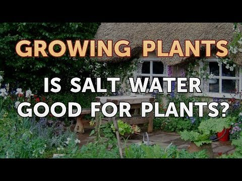 Is Salt Water Good For Plants?