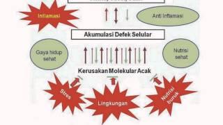 Enzim Telomerase dan Telomere; Presentasi Biologi Sel; biologi atma jogja