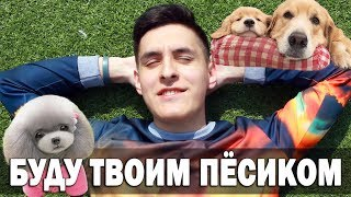 ЛЮБИМАЯ ПЕСНЯ ТВОЕЙ ДЕВУШКИ | Funny Dogs Video | Песня про пёсика на укулеле