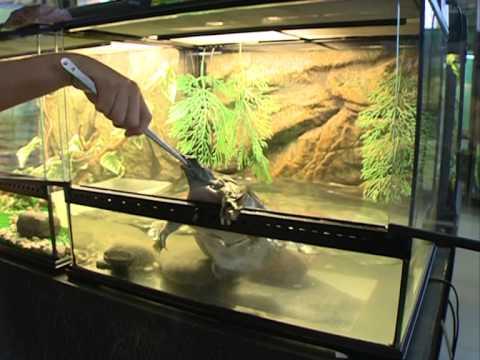 Акватеррариум двойной для рыб и черепах - YouTube