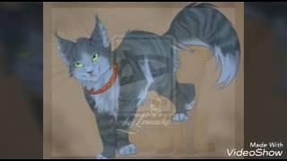 Картинки аниме котиков 💕💕💕💕💗💗💗💗