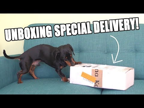 Crusoe Unboxing SPECIAL Delivery!! - Cute Dog Video Unboxing!