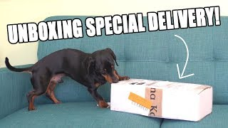 crusoe-unboxing-special-delivery-cute-dog-video-unboxing