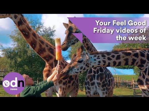Your Feel Good Friday videos of the week: 2