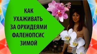 Как ухаживать за орхидеями фаленопсис зимой(Мой опыт по уходу за орхидеями фаленопсис зимой. Как ухаживать за орхидеями зимой, поддерживать влажность,..., 2016-01-08T12:21:47.000Z)