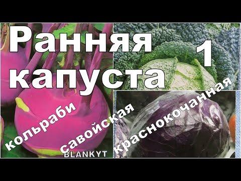 РАННИЕ И РАЗНЫЕ КАПУСТЫ. 1. Посев и всходы. Кольраби, савойская, краснокочанная
