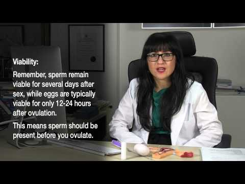 How To Get Pregnant - Using An Ovulation Prediction Kit (OPK) - Series 1 - Episode 7