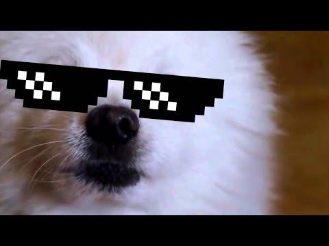 GABE THE DOG COMPILATION 2016 🐶 ✔