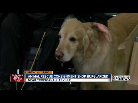 Las Vegas animal rescue thrift shop burglarized