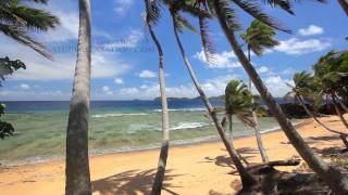 """""""Perfect Palms"""" Hidden Island in Fiji Endless Nature Video w/ Stereo Sounds 1080p"""