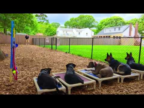 Providence Dog Trainers: Rottie/Doberman Mix, Missy, Off Leash | Best Dog Trainers in RI