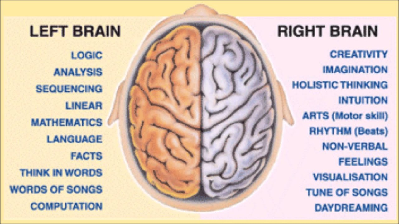 understanding of the principle of the right and left brain hemisphere by examining split brain patie