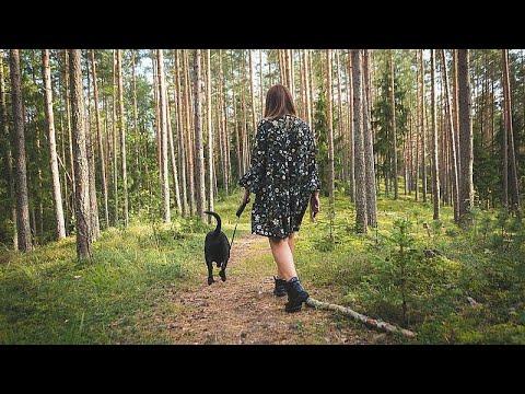 كلاب تقتل امرأة حاملا أثناء تنزهها في غابة شمال فرنسا  - نشر قبل 24 ساعة