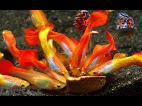 Как сделать в аквариуме воду чистою