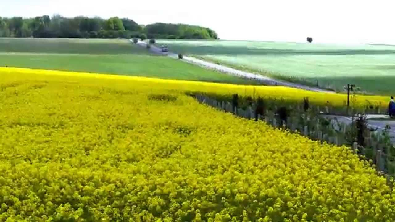 England Stonehenge Fields Of Yellow Canola Flowers And Cloud