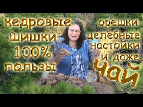 КЕДРОВЫЕ ШИШКИ - 100% пользы: орешки, целебные настойки и даже ЧАЙ
