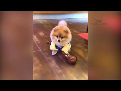 A Cute Dogs joking around the widgets -  PETS PRODUCTIONS - Laugh 1
