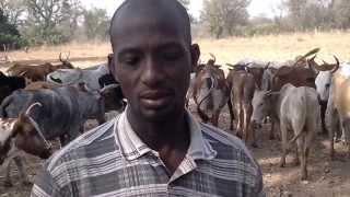 Filière bétails à Gbon