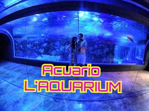 C mo es el acuario l 39 aquarium en playa del carmen youtube for Como es acuario