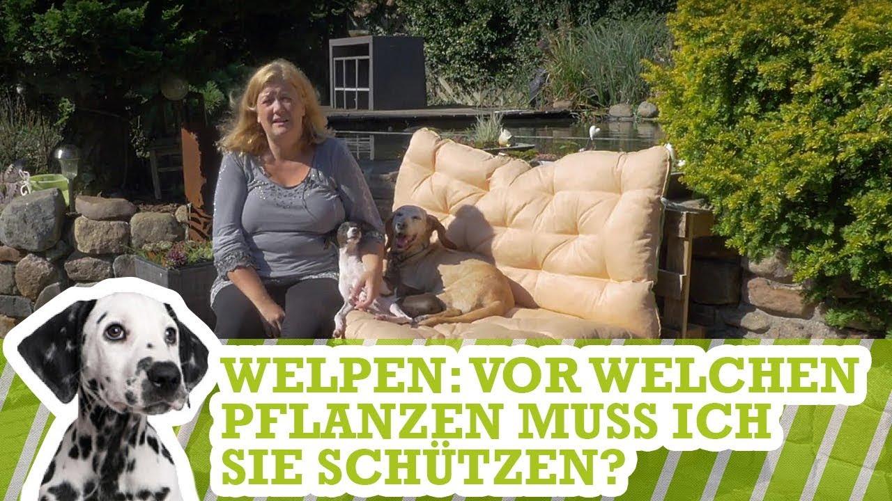 Gartenfigur Hund Westi Malteser Welpe spielt 370406 Garten Deko lebensecht Figur