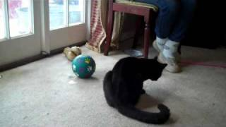 To Hone Your Timing Try Training Cats, It