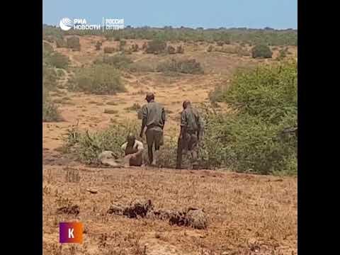 Слоненок в южноафриканском парке Addo Elephant угодил в яму с грязью