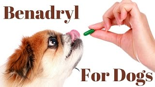 Benadryl Dosage For Dogs Chart