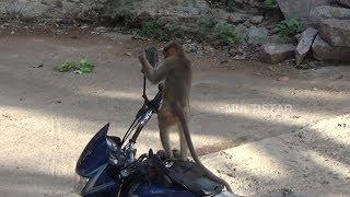 ఈ కోతి వేషాలు  చూస్తే   పొట్ట  పగిలిపోతుంది    2018 latest funny videos