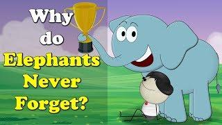 Why do Elephants Never Forget?   #aumsum #kids #education