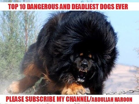 Top 10 Deadliest and dangerous dogs ever | BY ABDULLAH HAROON OFFICIAL