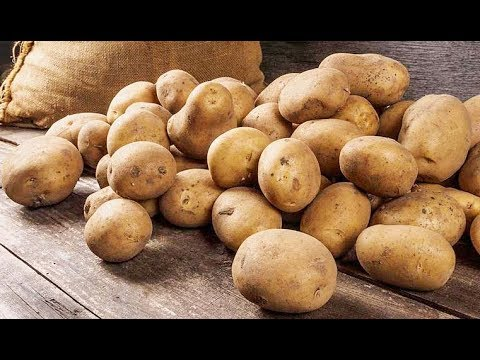 Новые сорта картофеля в Челябинской области