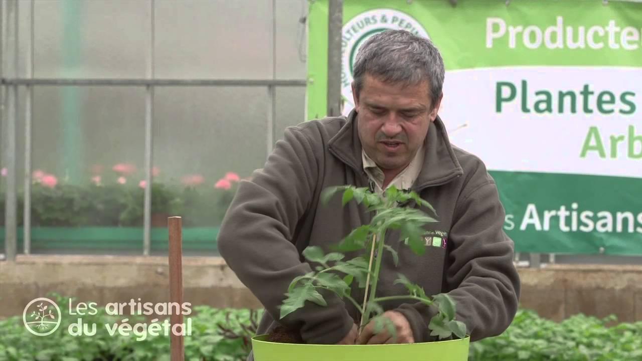 Planter Des Tomates En Pot comment planter des tomates en pots ?