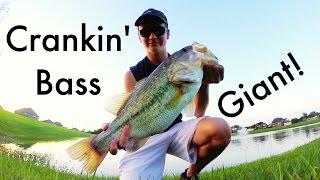 monster crankin bass