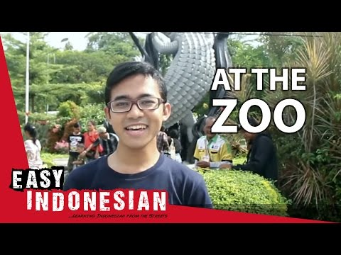 Easy Indonesian 3 - At the zoo