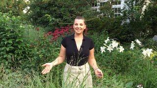 🌺 July Garden tour ~ Tons of Blooms ~ Surprise Announcement 🌺