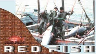 Mancing Tuna Kapal ini Penuh dengan Ikan Tuna Super Besar Part 2