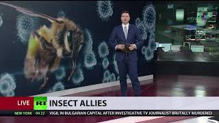 Darpa's insect allies is a bioweapon warned by experts.