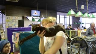 Выставка кошек в Пензе, 29 и 30 марта 2014