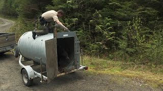 Trash-Eating Black Bear Released Back Into the Wild