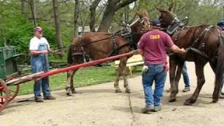 Runaway Mule Cart