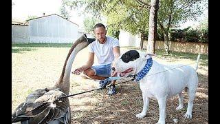 Nino et Rillette ou l'amitié insolite entre une oie et un chien, à Monteux