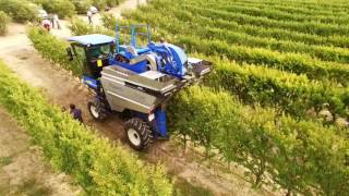 5th SHD almond mechanical harvest