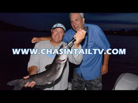 Channel Catfishing on the Connecticut River | Chasin