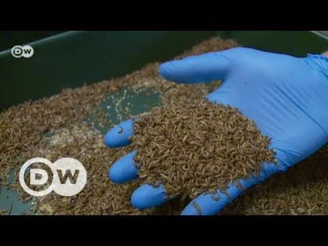Germany's Bug Burgers | DW English