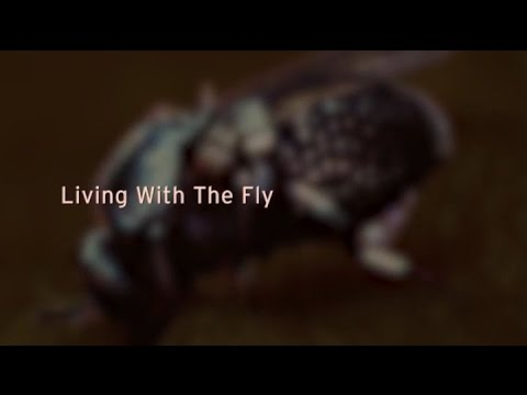 'Living with the Fly' - River Blindness in Ghana